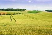 Farmland in Upper Austria — Stock Photo