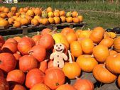 Pumpkins with Gingerbread Man — Stock Photo