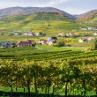 Vine Hills in Lower Austria — Foto Stock