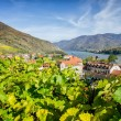 Stock Photo: Vineyard in Lower Austria