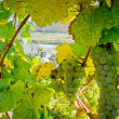Natural Frame with Winegrapes — 图库照片