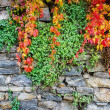 Autumn leaves against a rock wall — 图库照片