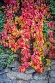Rock wall with autumn leaves — Stock Photo