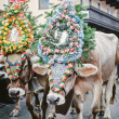 Decorated Cows in Austria — Stock Photo