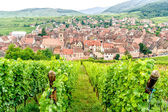 Village in Alsace — Stock Photo