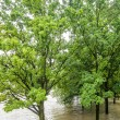 Trees in the High water — Stock Photo
