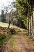 Footpath in Upper Austria — Stock Photo