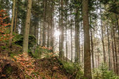 Sun in a autumn Forest — Stock Photo