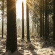 Sun in a winter Forest — Stock Photo