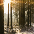 Stock Photo: Sunset in the Winter Forest
