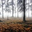 Stock Photo: Dark forest in autumn