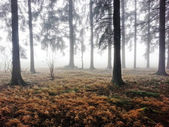 Dark forest in autumn — Stock Photo