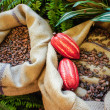 Cocoa Beans and Fruits — Stock Photo #45559359