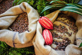 Cocoa Beans and Fruits — Stock Photo