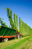 Harvester on a Hop Field — Stock Photo