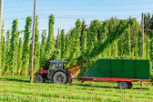 Harvesting Hop with a Truck — Stock Photo