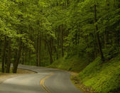 Road into the Woods — Stock Photo