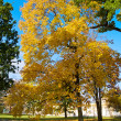Autumn tree on lawn — Stock Photo