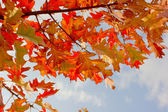 Feuilles de l'arbre automne — Photo