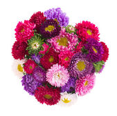 Bouquet of aster flowers — Foto Stock