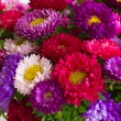 Stock Photo: Autumn aster flowers background