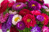 Autumn aster flowers background — Stock Photo
