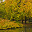 Autumn park — Stock Photo #12903442
