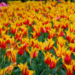Colorful flowerbeds — Stock Photo