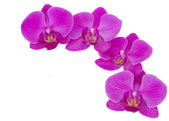 Flowers of orchid frame — Stock Photo