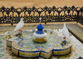Bathing doves, Seville, Andalucia, Spain — Stock Photo