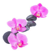 Border of orchid and zen stones — Stock Photo
