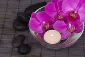 Orchid s with orchids — Stock Photo