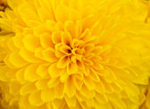 Abstract yellow petals — Stock Photo