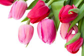 Close up of spring tulips — Stock Photo