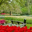Bench in garden Keukenhof — Stock Photo