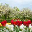 Spring blooming trees — Stock Photo
