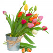 Stock Photo: Spring tulips in pot
