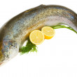 Atlantic Salmon — Stock Photo #17005411