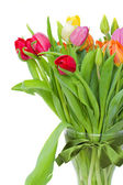 Bouquet of tulips close up — Stock Photo