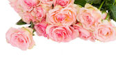 Border of fpink roses — Stock Photo