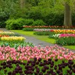 Spring tulips Keukenhof — Stock Photo