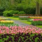 Spring tulips Keukenhof — Stock Photo #17387289