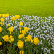 Stock Photo: Colorful flowerbeds with grass