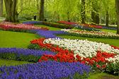 Spring flowers in holland garden — Stock Photo