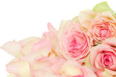 Rosa rosor med kronblad — Stockfoto