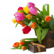 Blooming  tulips with present — Stock Photo