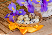 Eggs and irises for easter — Stock Photo