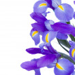 Bouquet of blue  irises - Stock Photo