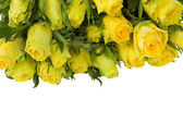 Yellow roses border — Foto de Stock