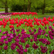 Stock Photo: Colorful spring flowerbeds